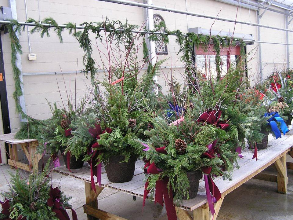 christmas-greens