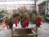 christmas-container-garden