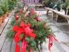 christmas-greenhouse-greens